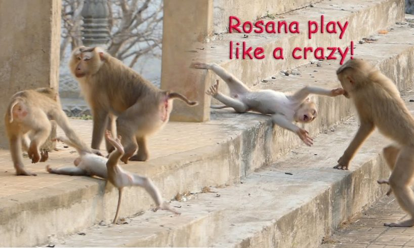 Wonder about Rosana when she played with Rocky, she always played like crazy to her brother- Part449