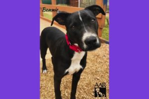 BONNIE loves to play keep away - Adoptable at AAR - Abandoned Animal Rescue