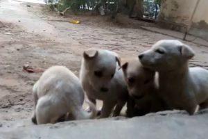 Cute Puppies - A Cute Puppy Videos 2016 ( NEW )