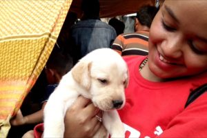 Cute Puppies Are Going To Their New Family At Galiff Street Kolkata
