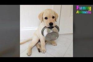 Cutest Golden Retriever Puppy - Cute Puppies Videos Compilation 2018