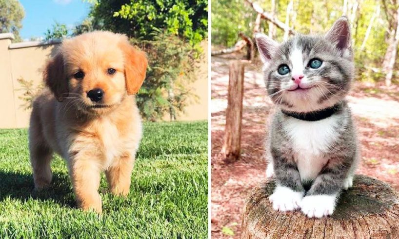 Cutest Puppies And Baby Animals - Baby Cats | Funny Pet Animals Life | Cutest Puppies City