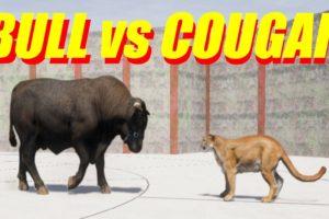 Far Cry 5 Arcade - Animal Fight: Bull vs Cougar Battles (Custom Map Editor)