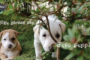 Indian Street Dog's Cute Puppies | Desi Dog Puppies