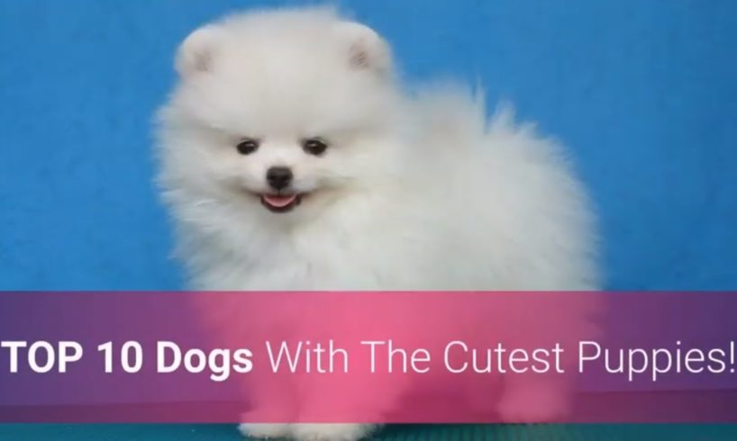 🐕 List Of Top 10 Dog Breeds With The Cutest Puppies In The World!
