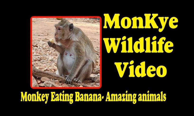 Monkey Eating Banana - Amazing animals | Monkey Wildlife Video