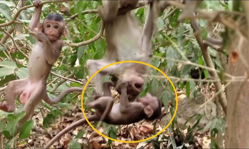 Monkey baby learned to climb tree🌳he playing so happy,They live happily ever after