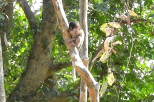 Poor Baby ALBA Playing Alone On The Tree During Her Mom Not Stay/Sounds Monkey