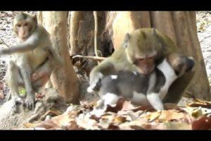 Puppy Lost Mother | Monkey Nurse Poppy Warming & Playing | Monkey Sounds