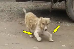 Rescue Abandoned Puppy Was Handicapped On The Dusty Road & Great Growth