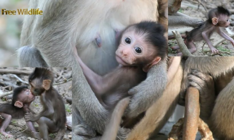 So cute monkey, no named yet, he could play with Moy and Pee, he is lovely baby