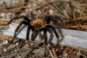 Spiders - National Park Animals for Kids