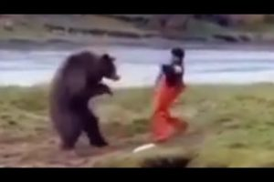 The Kung Fu bear Vs man -|funny animal fight |