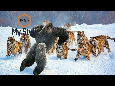 Wild Discovery Animals - Most Amazing Moments Of Wild Animal Fights - Animals Documentary BBC 2018