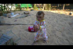 baby monkey Tony play egg yolk