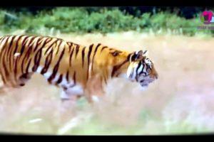wild Nature : Extreme Animal Fights (Full HD )♦أشرس معارك الحيوانات صورتها الكاميرا  بجودة عالية