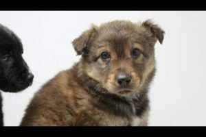 Animal rescue groups see uptick in pet adoptions during coronavirus pandemic
