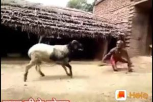 Best fails of the week, Best fails, Best fail of the week, Try not to laugh fail,
