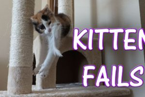 CUTEST Kitten FAILS! Compilation
