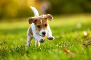 CUTEST PUPPIES COMPILATION