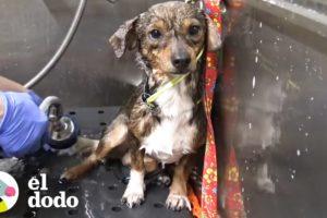 Cachorro es abandonado en las vías del tren   El Dodo