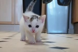 Cats Kittens So Cute Baby Cat Playing Video #CatsKittens 67