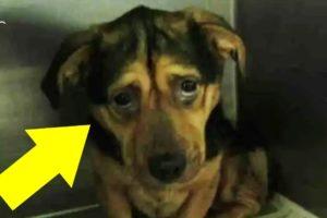 Couple Adopt Sad Dog Despite Multiple Warnings From The Animal Shelter