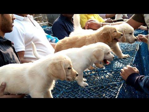 Cute Puppies At Galiff Street Pet Market Kolkata l Largest Pet Market Of India