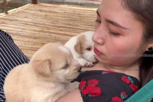 Cute Puppies on Owner Girl want food and milk | SimBona Play with Dog