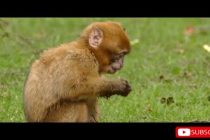 Funny Animal Videos  | Compilation | WATCH ADDICTS