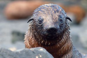 Funny and Cute Baby Animals | Baby Fur Seals, Turtles, Crocs | Love Nature