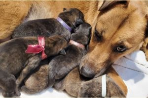 Helping A Stray Pregnant Dog Give Birth To 7 Cute Puppies!