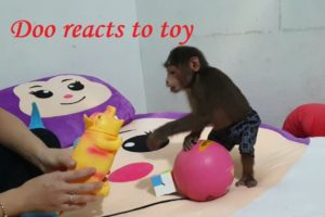 Monkey Doo Reaction To Playing  Pig Toy