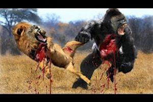 Most Amazing Wild Animal Attacks- CRAZIEST Animal Fights - lion,,anaconda, deer, Crocodile part 2