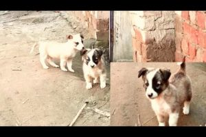 Puppies cute Intelligent playing video || wow! Amazing puppy video