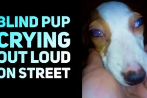 Rescue Blind Dog Crying Out Loud On Street with No One Help