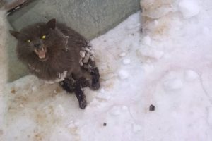 Rescue Poor Cat Was Crushed & Lying Still Under The Cold Snow