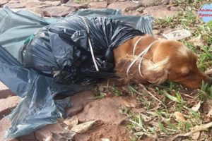 Rescue Poor Dog Was Beaten On The Head then be thrown in a trash bag with cables around the neck