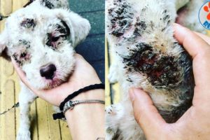 Rescue Poor Little Dog Dumped Outside Finally Gets A Family