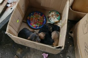 Rescue Poor Puppies Abandoned Near Garbage, Covered Hundreds Worms legs constipated