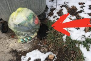 Rescue Poor Puppy was Abandoned beside Container Trash in Frozen, Sad and Alone..