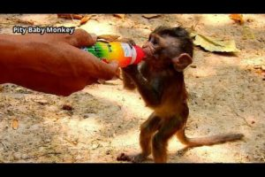 Rescue baby Alba by extra milk from new Cameraman, Thanks for kindness human for wild life