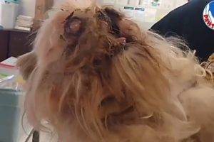 Screaming From Pain, Homeless Puppy Rescued With Removed Eye