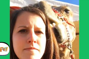 She's About to REGRET EVERYTHING! 😂🐪   Funny Videos   AFV 2020