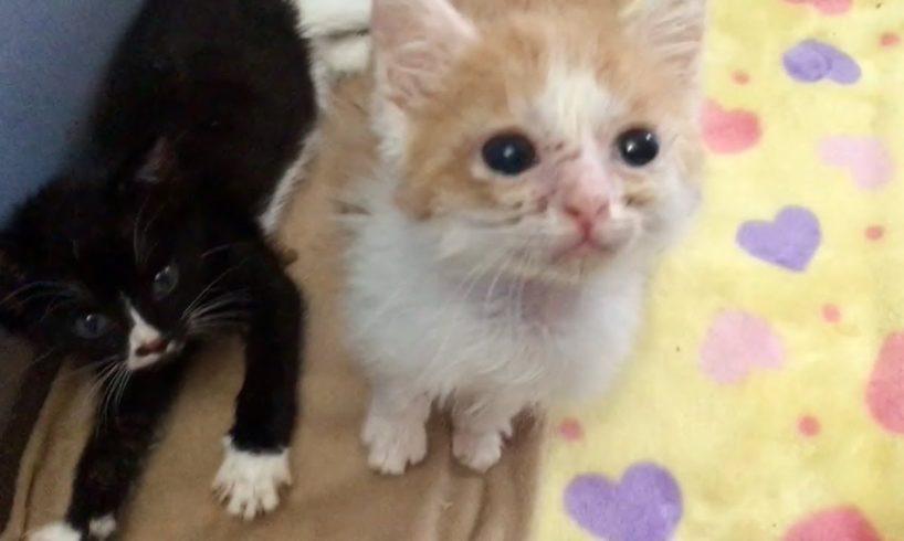 Siamese Kitten Family & New Kitten Accommodations - Cutest Kitten Faces