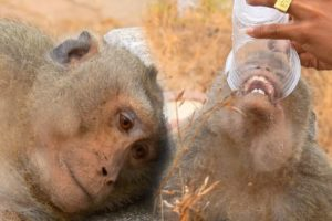 So excited that The miserable apes are rescued deaths surviving