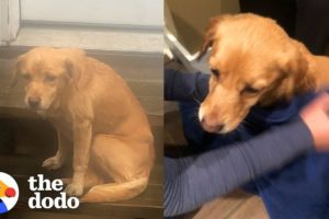 Stray Puppy Wanders Into Stranger's Home in the Middle of Night  The Dodo
