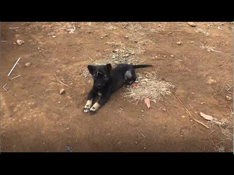 Very cute puppies - Cutest dog videos