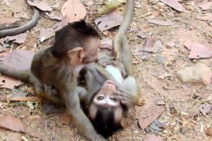 Wow Fantastic Little Baby Monkey Playing Together Like This! Very Lovely Day!