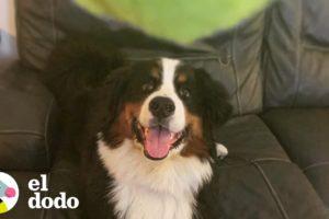 A este perro le encantan las bolas de tennis | El Dodo
